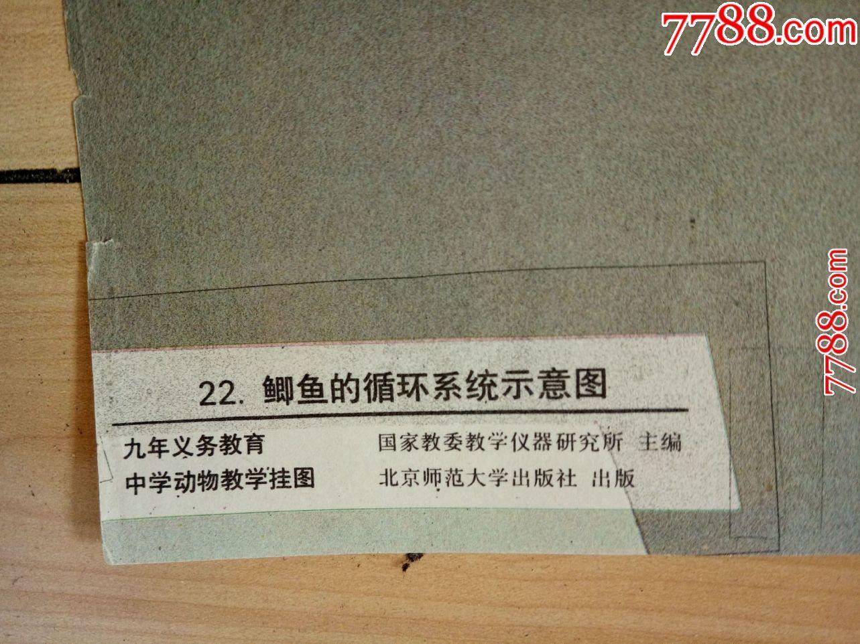 鲫鱼的骨骼22.鲫鱼的循环系统示意图--北京师范大学出版