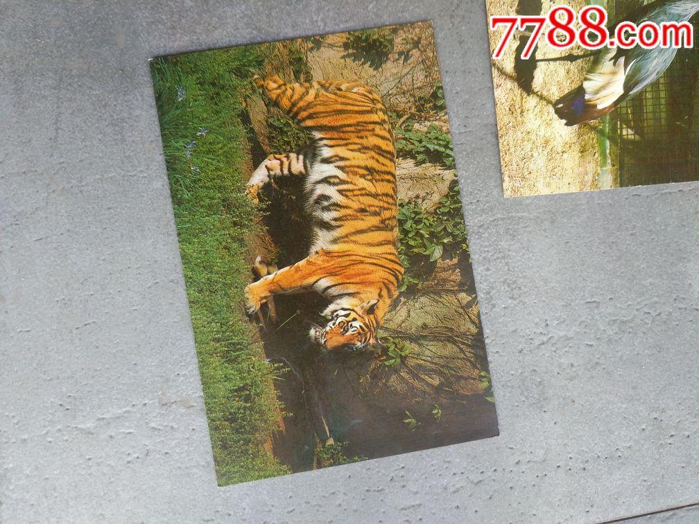北京动物园明信片