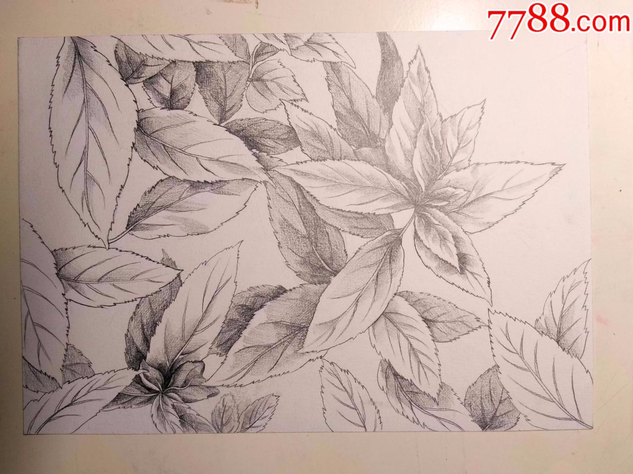 铅笔素描画稿原稿《树叶》图片
