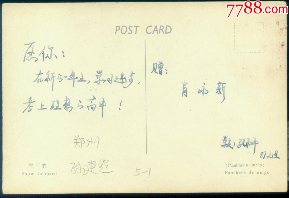 t153-1--雪豹--极限明信片--70年代北京动物园版