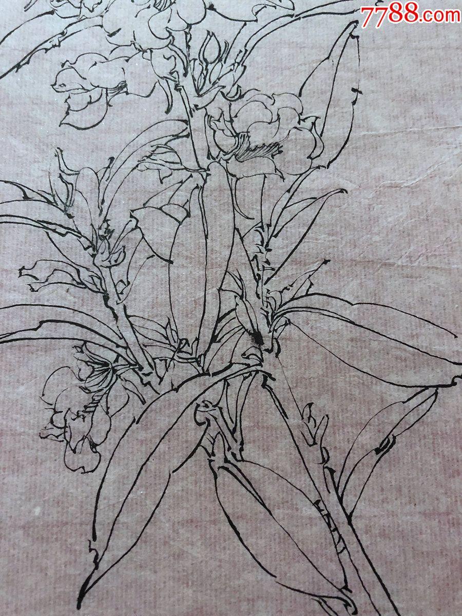 国画原作,610,工笔白描花鸟画