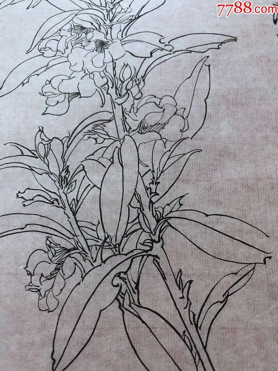 国画原作,644,工笔白描花鸟画