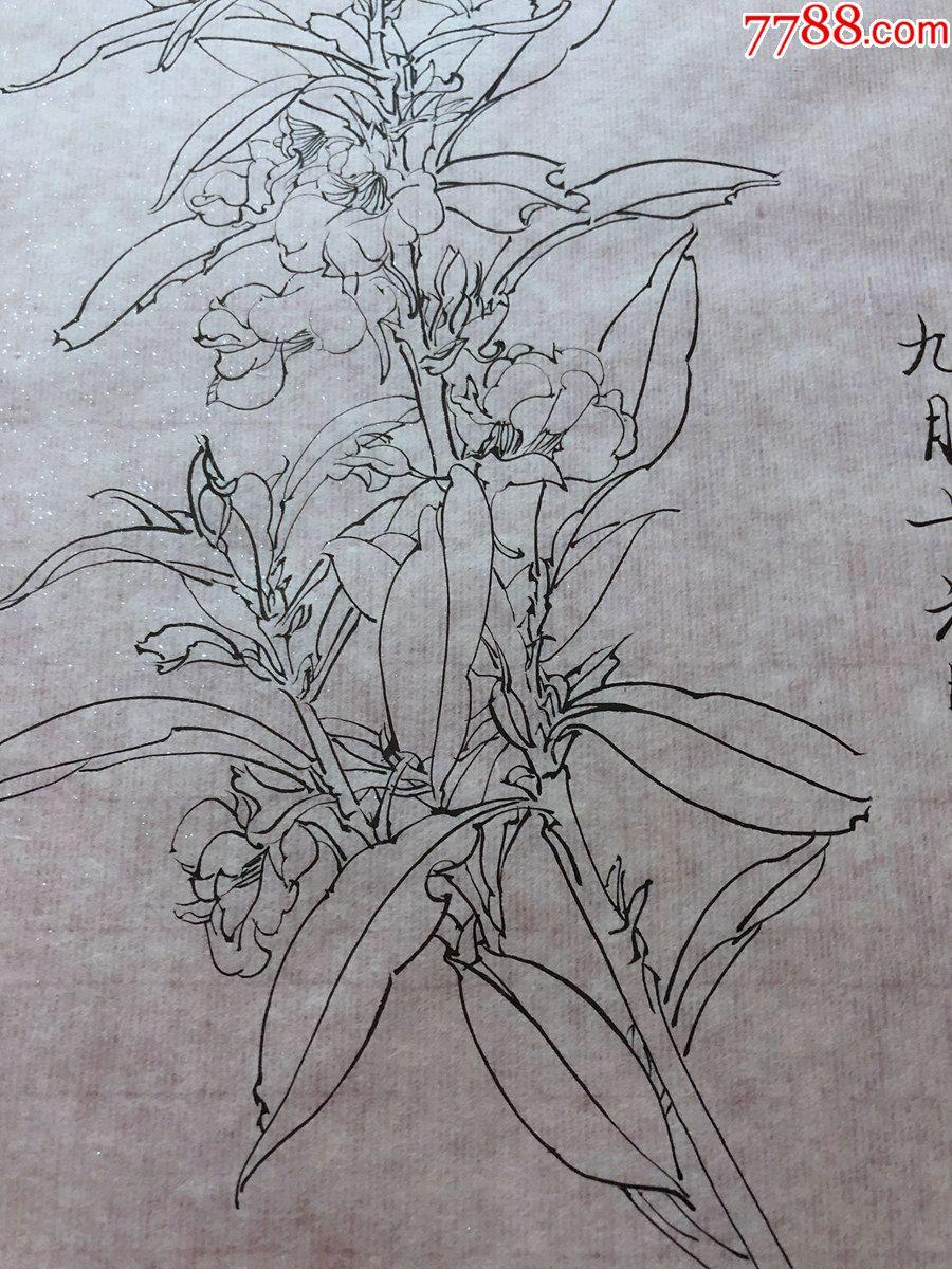 国画原作,647,工笔白描花鸟画