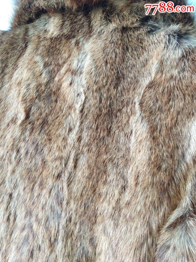 野生狸子大衣
