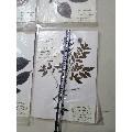 河南省中草��吮�-¥3,480 元_�淙~/植物�吮�_7788�W