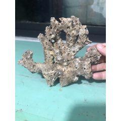 幾十年海底石珊瑚擺件(se76166630)_7788舊貨商城__七七八八商品交易平臺(7788.com)