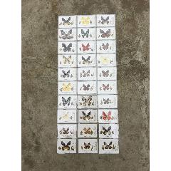 蝴蝶標本30種(se76734801)_7788舊貨商城__七七八八商品交易平臺(7788.com)