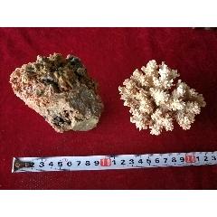 珊瑚,石頭2個(se77114548)_7788舊貨商城__七七八八商品交易平臺(7788.com)