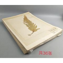 八十年代海草標本-----山東省海岸帶和海涂資源綜合調查(se77157371)_7788舊貨商城__七七八八商品交易平臺(7788.com)