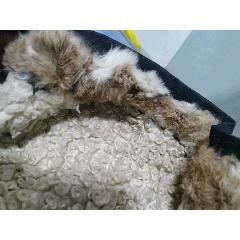 純羊羔毛,全新上衣(se77173002)_7788舊貨商城__七七八八商品交易平臺(7788.com)
