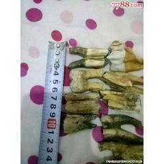 九個小牙化石(se77880481)_7788舊貨商城__七七八八商品交易平臺(7788.com)