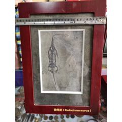 貴州龍化石(se77949903)_7788舊貨商城__七七八八商品交易平臺(7788.com)