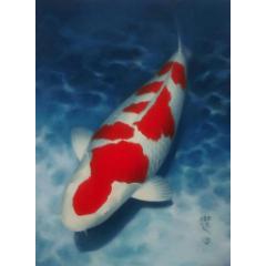 各種錦鯉魚出售(se77984012)_7788舊貨商城__七七八八商品交易平臺(7788.com)