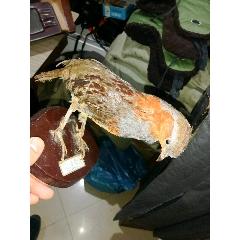 鳥標本(se78111624)_7788舊貨商城__七七八八商品交易平臺(7788.com)
