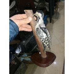 鳥標本(se78111651)_7788舊貨商城__七七八八商品交易平臺(7788.com)