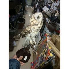 鳥標本(se78111685)_7788舊貨商城__七七八八商品交易平臺(7788.com)