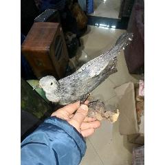 鳥標本(se78111713)_7788舊貨商城__七七八八商品交易平臺(7788.com)