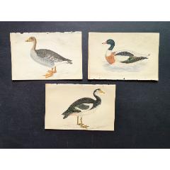 19世紀手工上色銅版畫《英國鳥類史》插頁《野鴨》等3張保真(se78175495)_7788舊貨商城__七七八八商品交易平臺(7788.com)