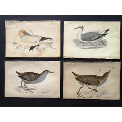 19世紀手工上色銅版畫《英國鳥類史》插頁《塘鵝》等4張保真(se78175501)_7788舊貨商城__七七八八商品交易平臺(7788.com)
