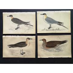 19世紀手工上色銅版畫《英國鳥類史》插頁《賊鷗》等4張保真(se78175492)_7788舊貨商城__七七八八商品交易平臺(7788.com)
