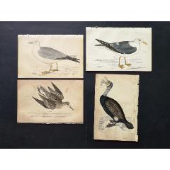 19世紀手工上色銅版畫《英國鳥類史》插頁《鸕鶿》等4張保真(se78175498)_7788舊貨商城__七七八八商品交易平臺(7788.com)