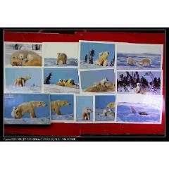 北极熊明信片(se83252980)_7788收藏__收藏热线