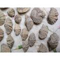 泥盆�o�r期3�|年�化石,批�l�r2元一���化石。(wh214641)_7788�f�商城__七七八八商品交易平�_(7788.com)
