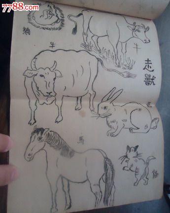 1971年铅笔画原稿(16开9张52幅动物画)