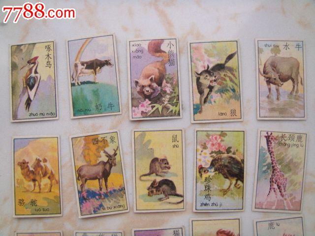 动物谜语画片25张