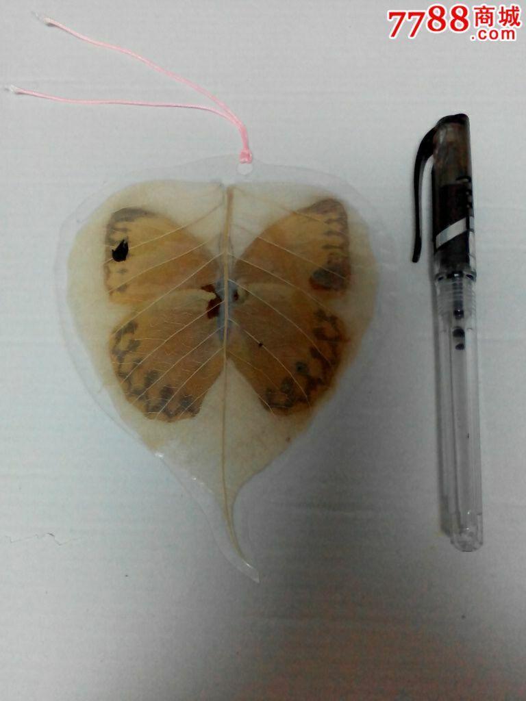 初中生生物标本制作图