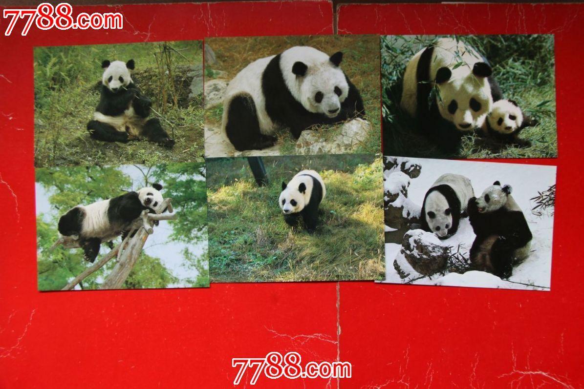 熊猫明信片