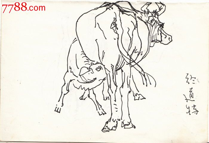 【画家张龙章·早期素描原画稿】吃奶的小牛