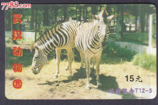 武汉动物园-斑马
