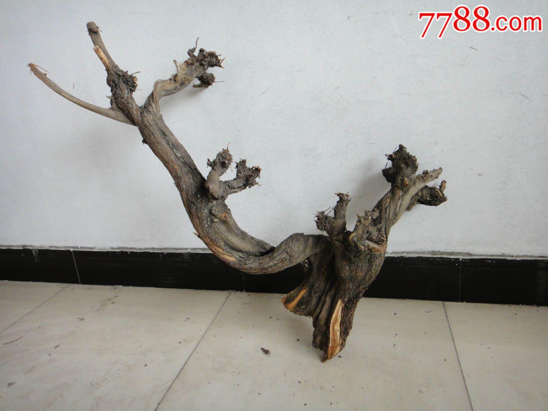 """太行山崖柏之""""发财树""""(红白双色料,满树金元宝,重约8.8斤)"""