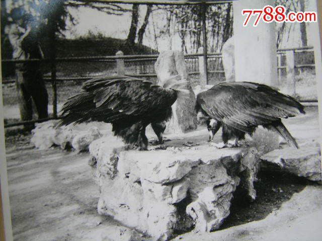 老照片【80年代,南京玄武湖动物园动物照片4张】