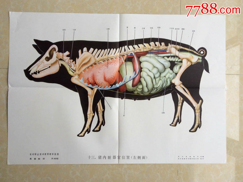 猪的部位图片大全图解