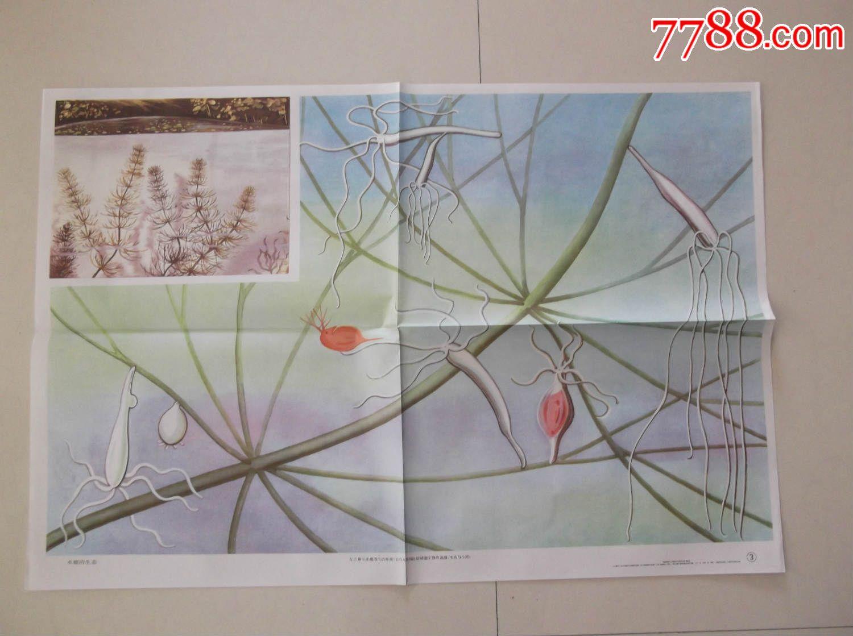 水螅横切结构图手绘