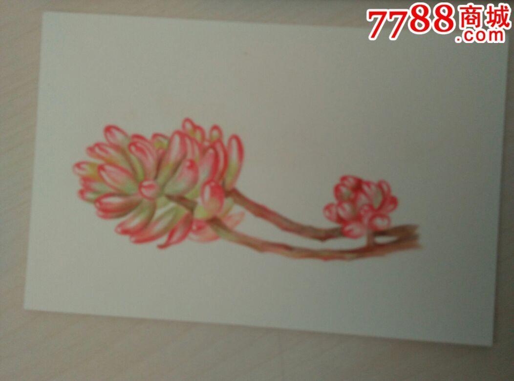 多肉彩铅彩色铅笔画植物