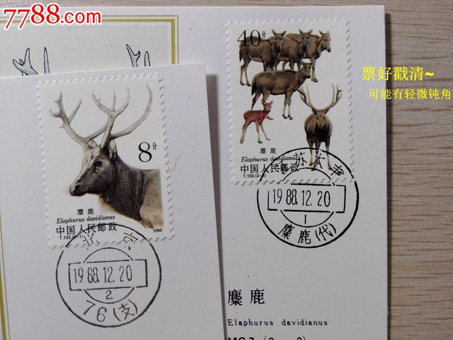 mc7麋鹿集邮总公司极限片2全世界珍惜动物绘画明信片