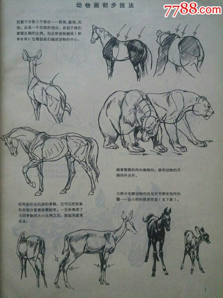 动物画技法(16开)